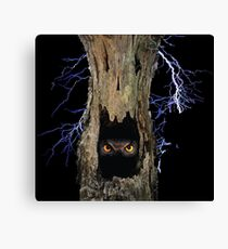 SCARY OLD TREES  Canvas Print