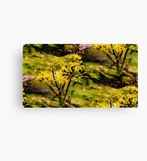 Yellow Bloom Canvas Print