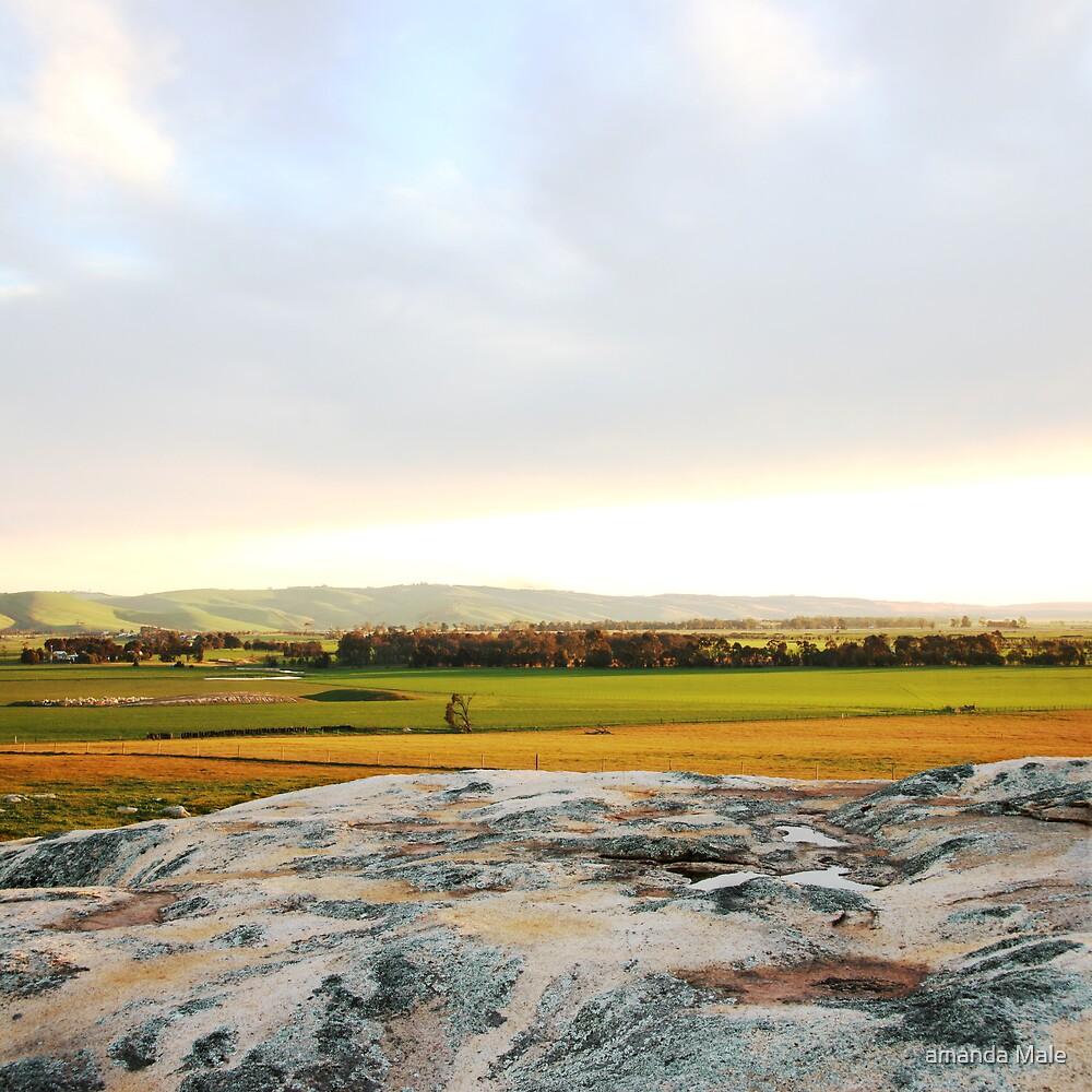 dogs rocks sunset Geelong by amanda Male