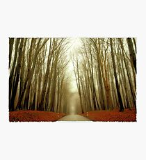 the cloud forest Photographic Print