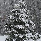 Wintery Tree... by lilkarl