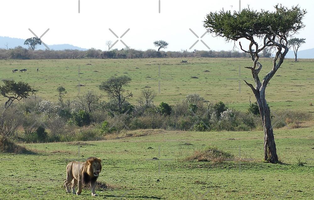 Lion Landscape by ApeArt