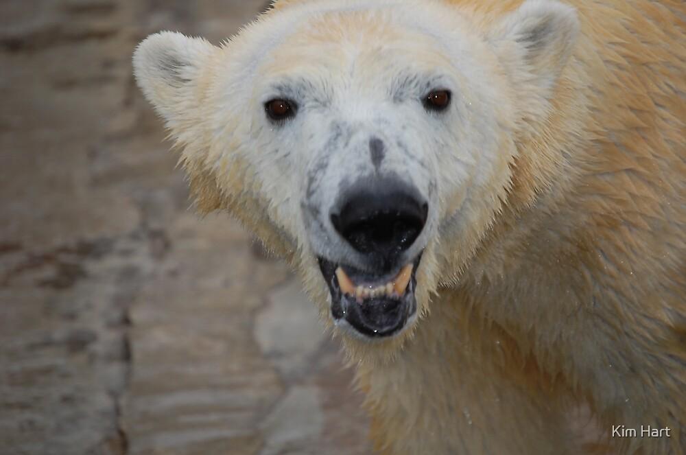 Smiling Polar by Kim Hart