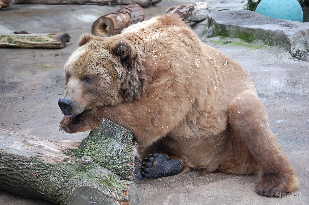 Dreaming Grizzly by Kim Hart