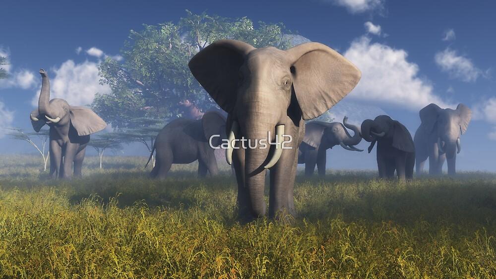 Afrique_1 / Africa_1 by Cactus42