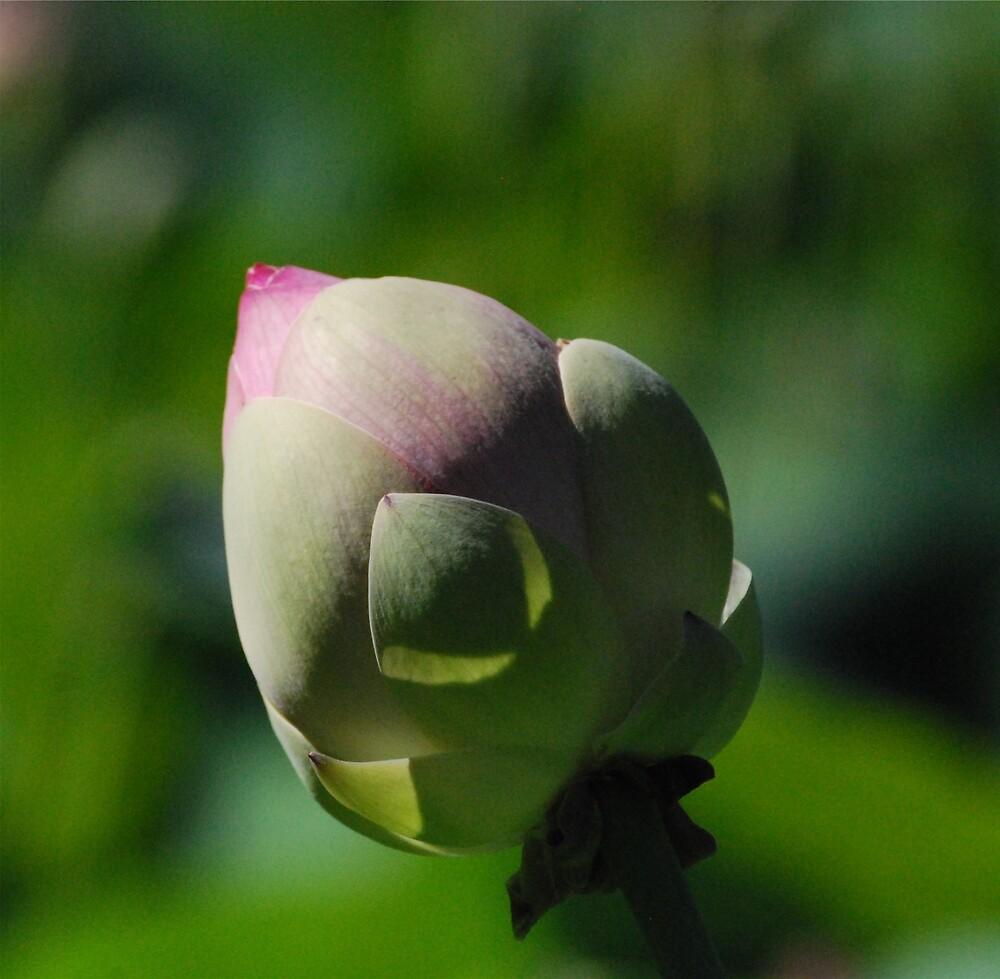 Lotus by Princessbren2006