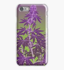 Purple Haze Medicinal Marijuana Cannabis iPhone Case/Skin