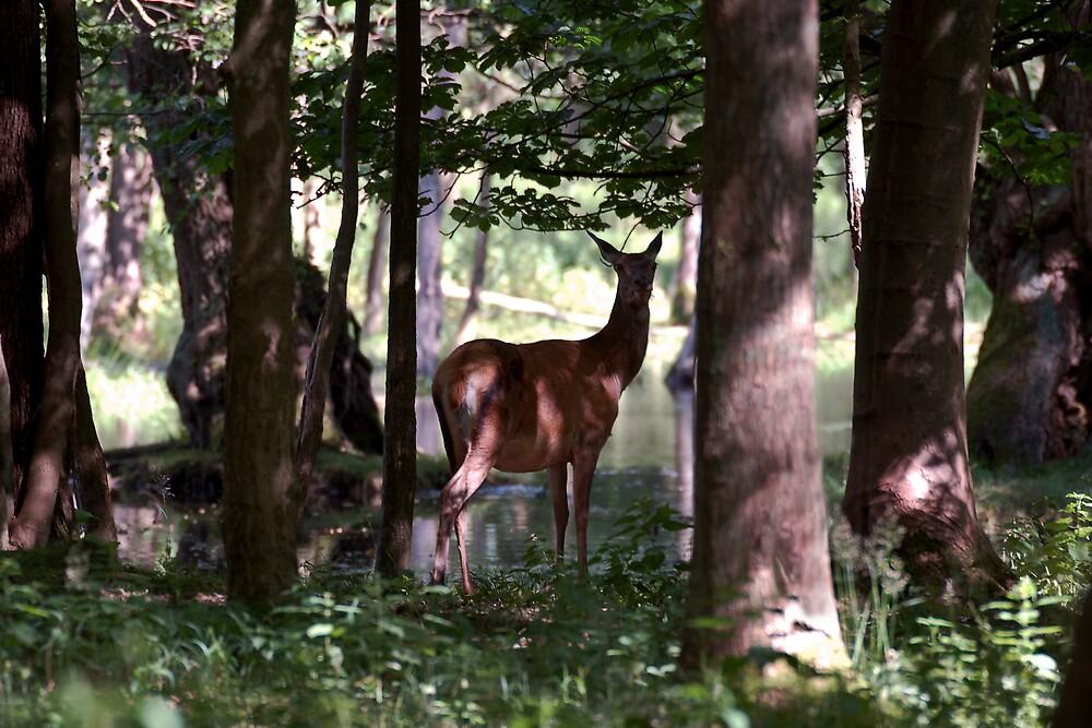 Deer by Janus  Olsen