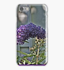 Purple Petals in Sun and Shadow iPhone Case/Skin