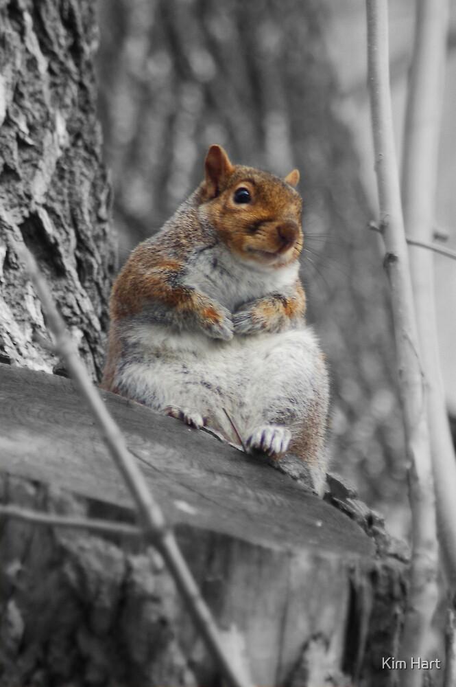 Squirrel by Kim Hart