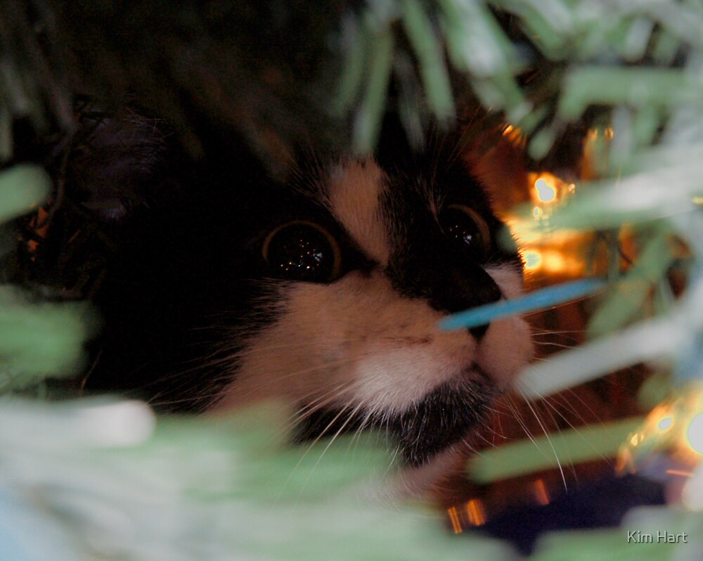Christmas in my Kitty's Eyes by Kim Hart
