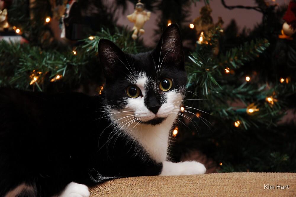 Christmas Kitty by Kim Hart