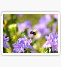 """ Azalea Honey "" Sticker"