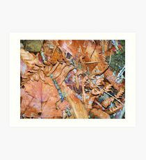 Forest Floor Litter Art Print