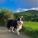 Just a Dog by Michael Haslam