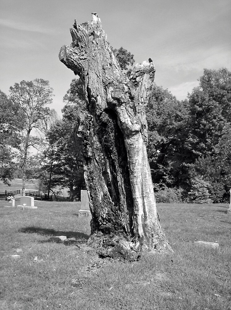 Dead Tree in Cemetary by shawnathomas