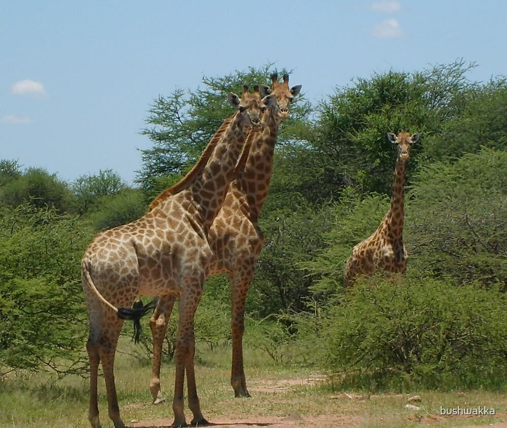 long neck thingies by bushwakka