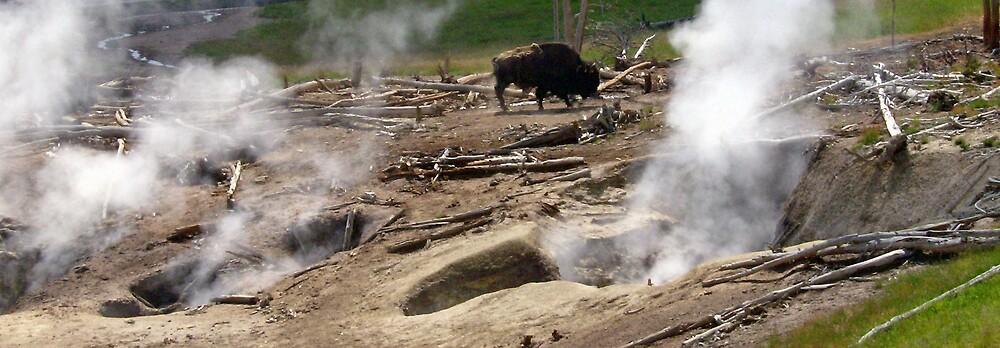 Bison Alone by shawnathomas