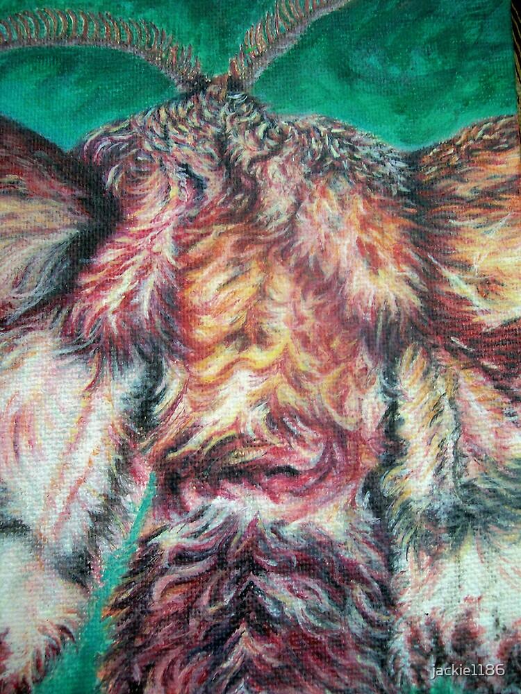moth by jackie1186