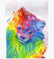 Rainbow Pomeranian Poster
