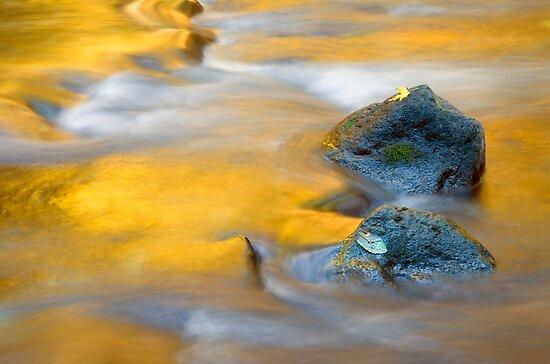 Golden Refuge by DawsonImages