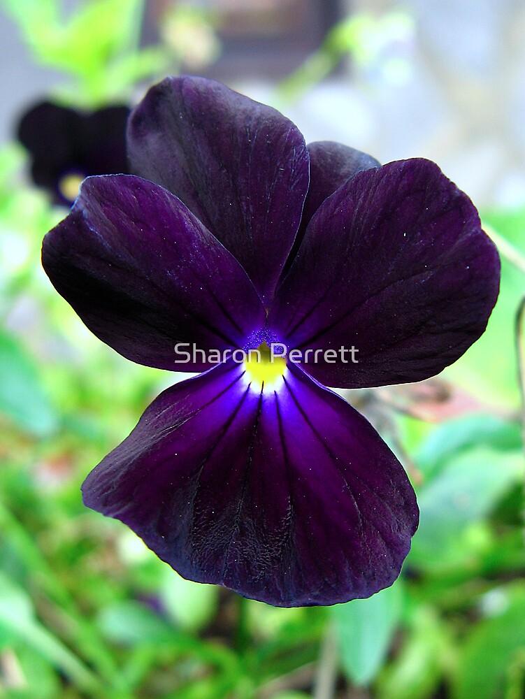 Velvet beauty by Sharon Perrett