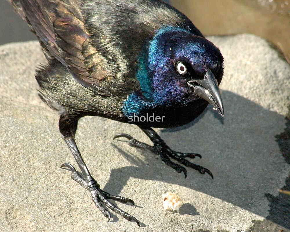 Scared Bird by sholder