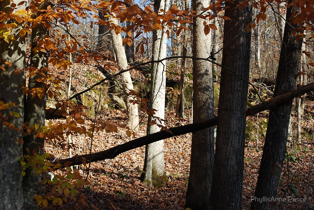 Fall in Appalachia   Copyright 2008 By PhyllisAnne Pesce by PhyllisAnne Pesce