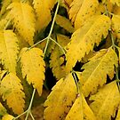 Wisteria Leaves in the Fall by Douglas E.  Welch