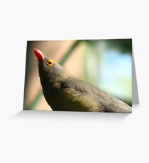 Red-Billed Oxpecker Greeting Card