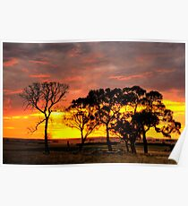 Sunset over the trees. Poster