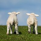 Two Little Lambs by M S Photography/Art