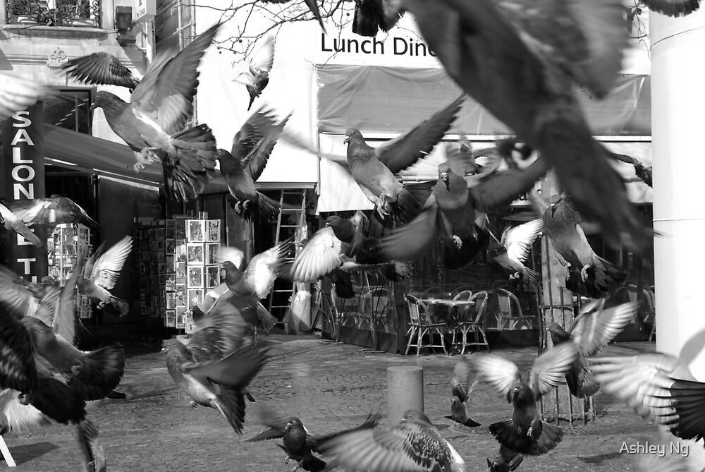 Feeding time by Ashley Ng
