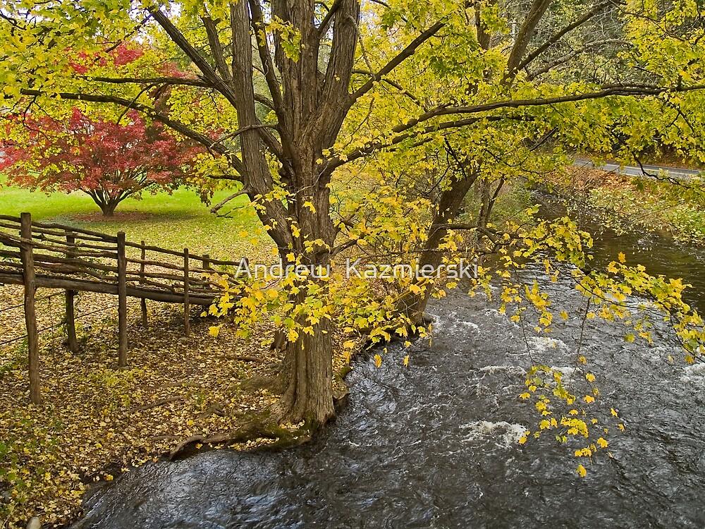Autumn Scene by andykazie