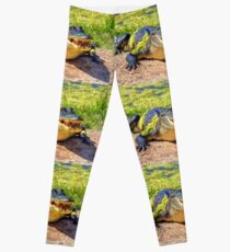 Gator Leggings