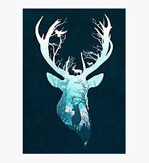 Deer Blue Winter Photographic Print