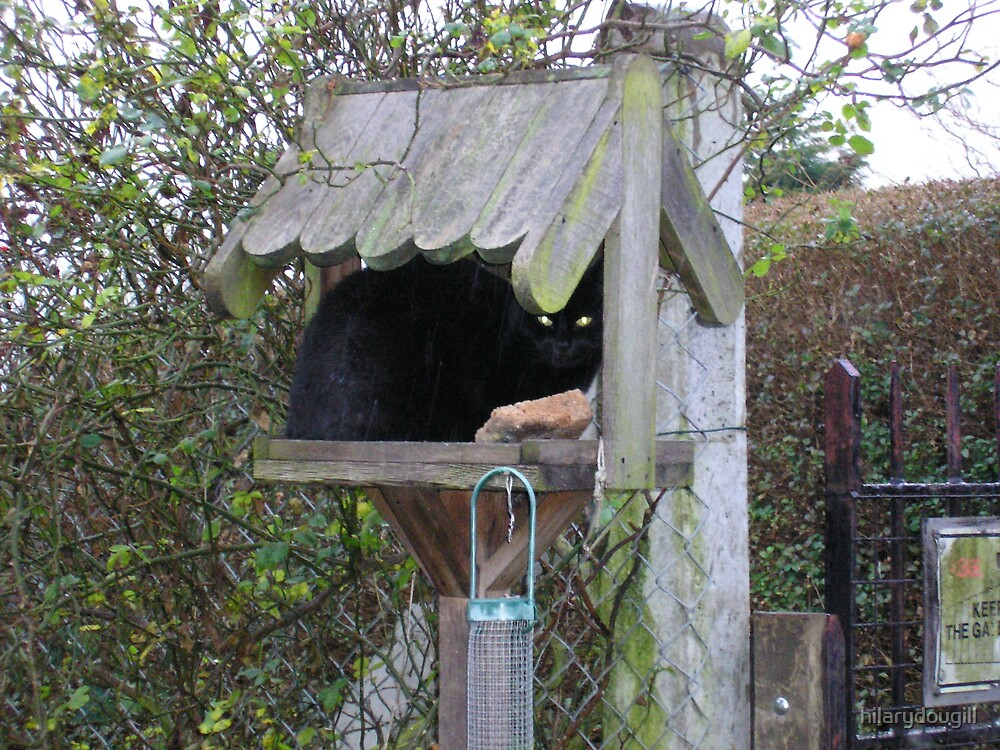 Cat in the Bird Table by hilarydougill