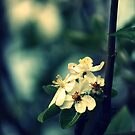 Blüten in der Dämmerung von Evita
