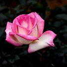 Pink und Weiß von Evita