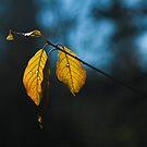 last light by srphotos