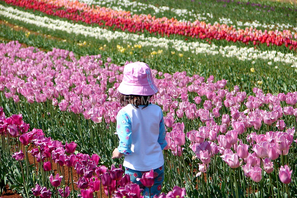 Tulip Farm by ~ Fir Mamat ~