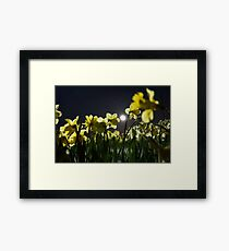 Daffodil by moonlight Framed Print