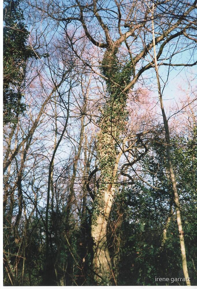 A tangled tree by irene garratt
