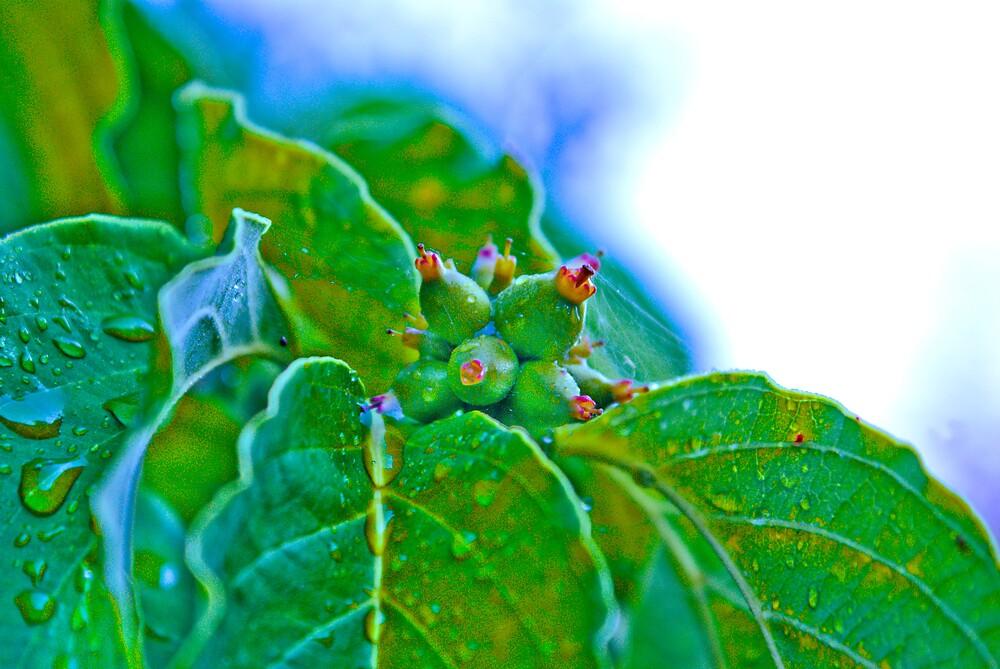 Leaf Drops by Rod  Adams