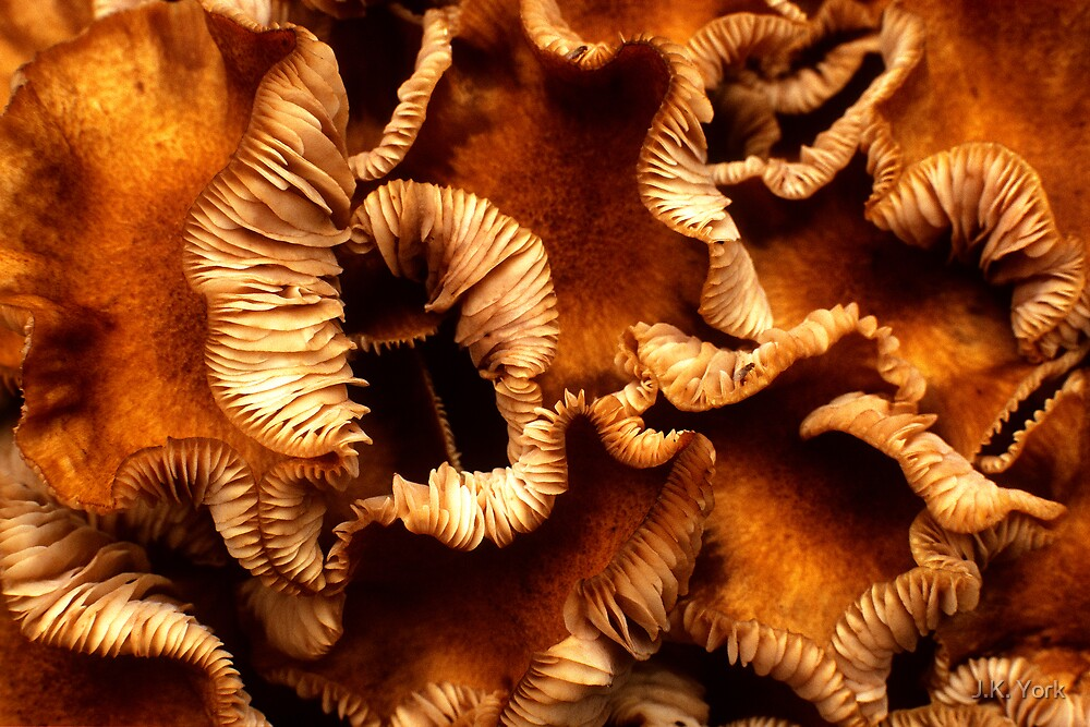 curly shrooms by J.K. York