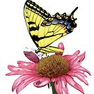 Swallowtail and Coneflower by botanicalsbyV