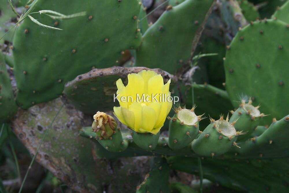 cactus flower2 by Ken McKillop