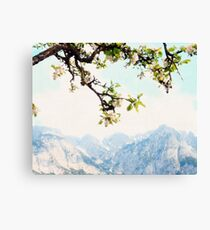 Apple Blossoms and Mountains  Canvas Print