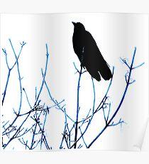 Blackbird Silloutte Poster