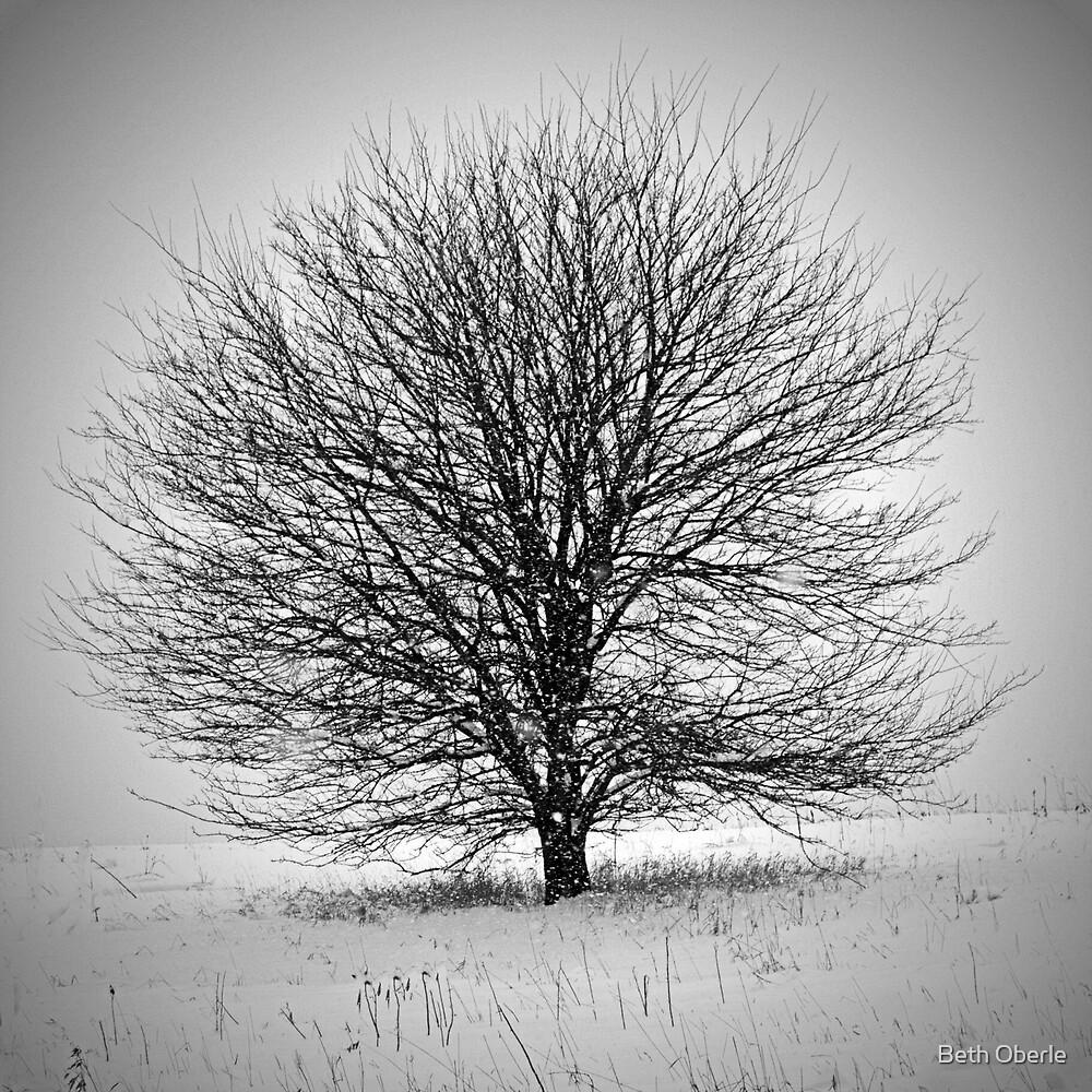 Winter Tree by Beth Oberle